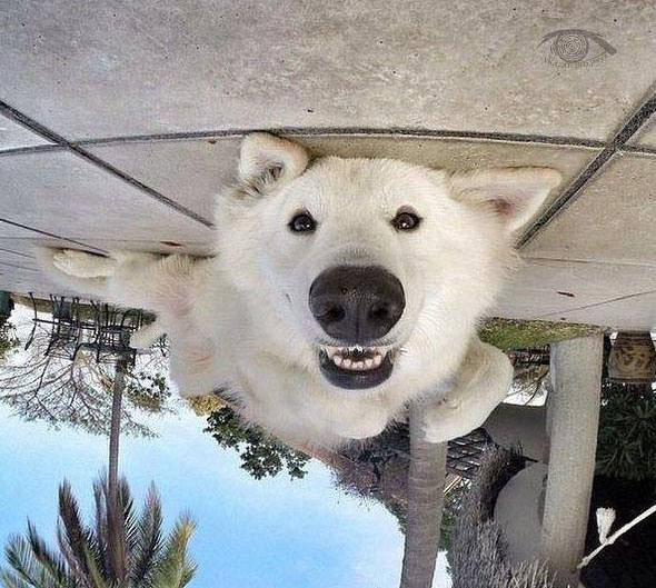 Собаче щастя