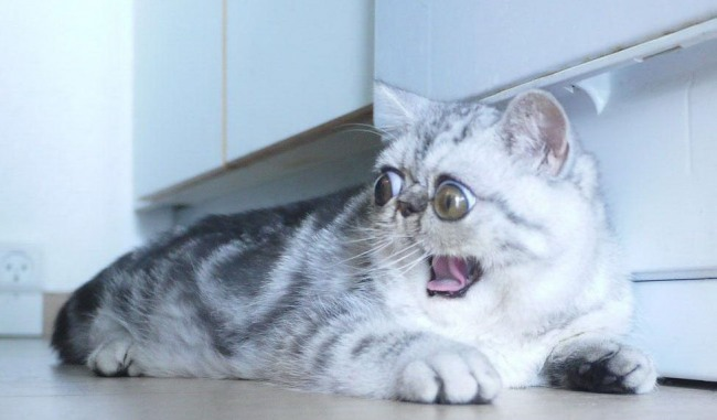 Переляк кота