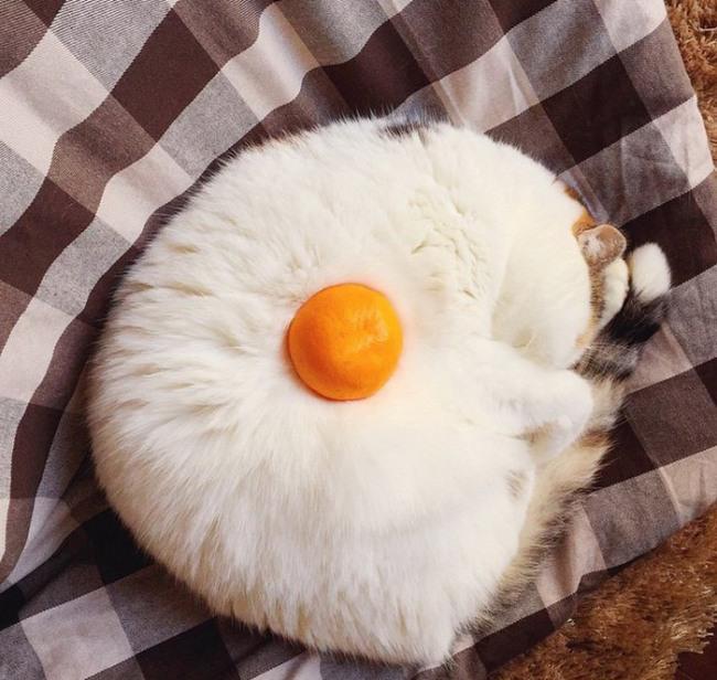 Кіт та мандарин