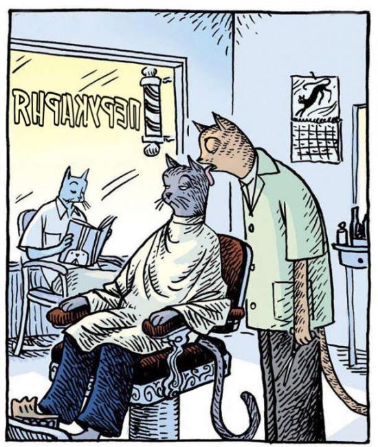 Перукарня для котів