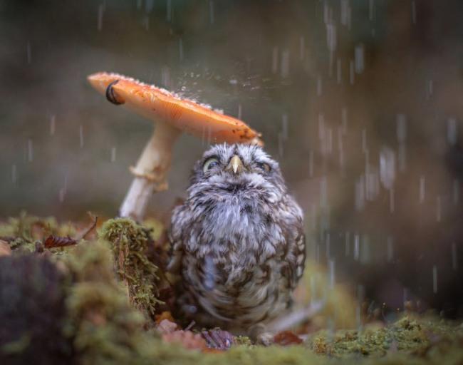 Грибок рятує від дощу