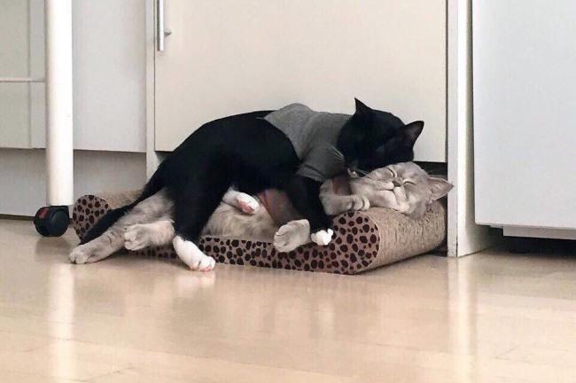 Кіт це найкраща подушка, особливо для іншого кота