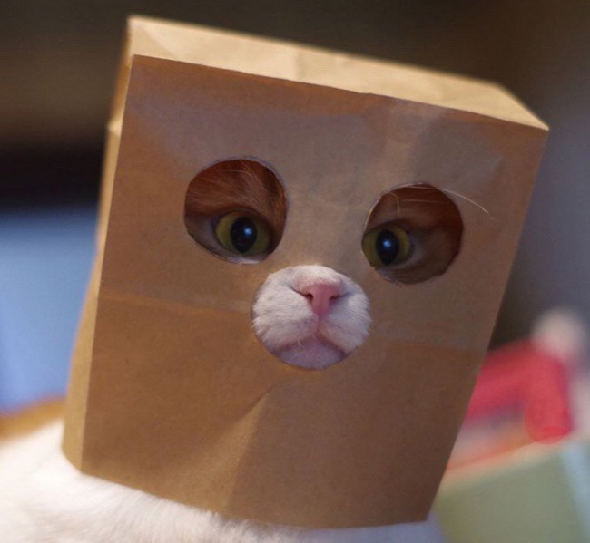 Кіт в масці