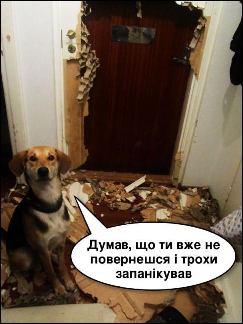 Коли твій пес панікує