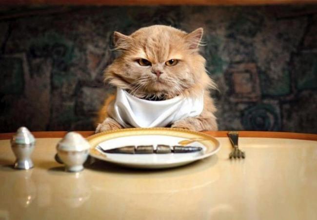 Кіт за вечерею