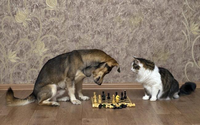 Шах і мат