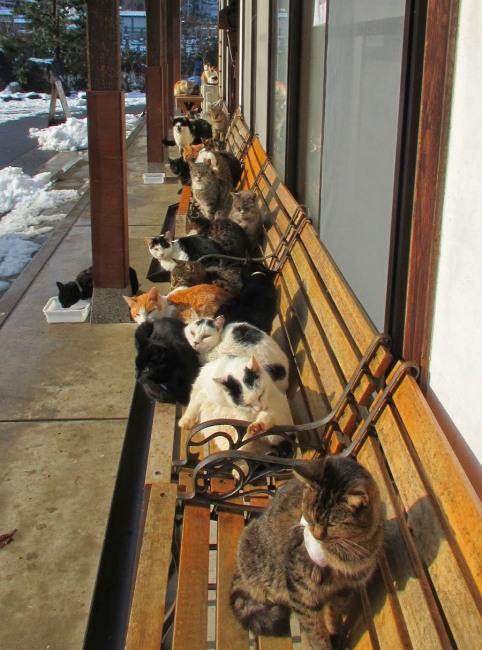 Лежбище котиків