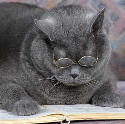 Кіт учений