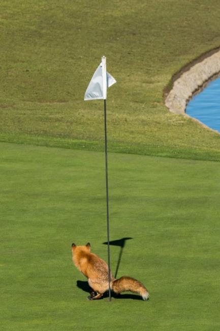 Противник гри в гольф