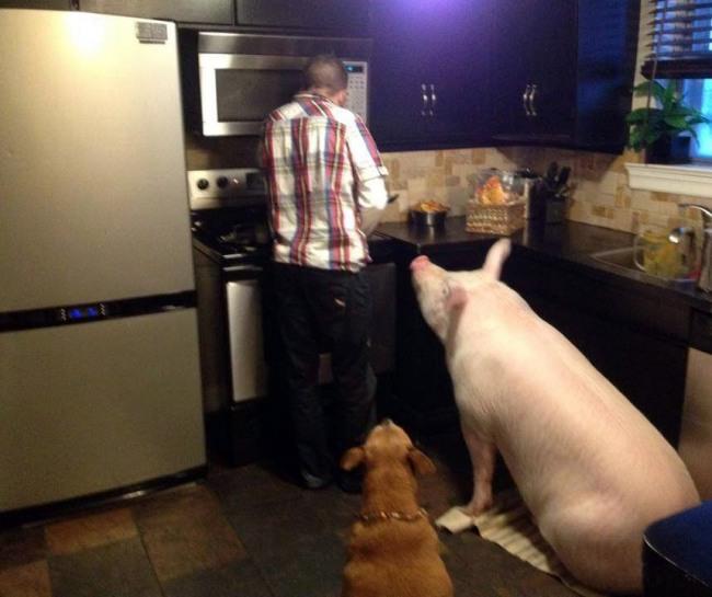 Домашні улюбленці в очікуванні вечері