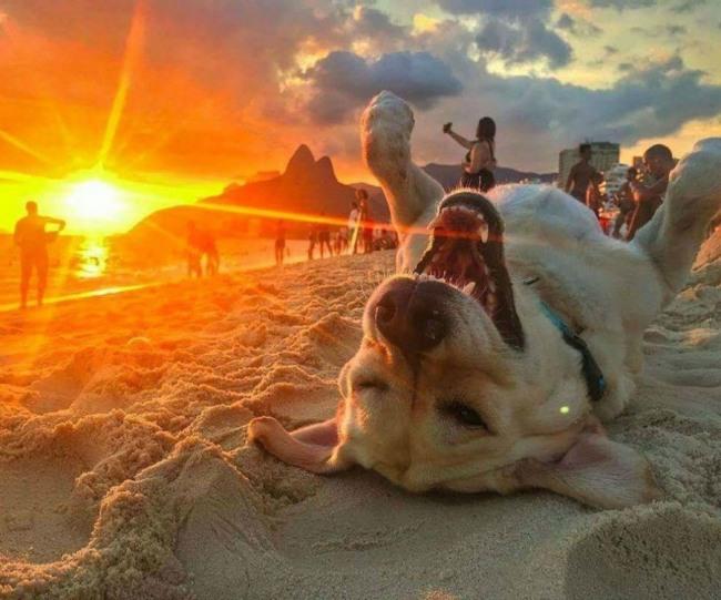 Собача радість