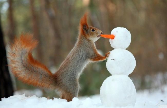 Білка і сніговик