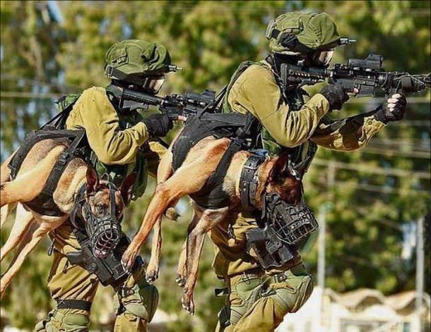 Спецназівці з собаками