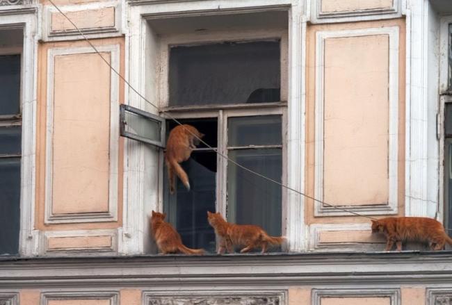 Коти повертаються з прогулянки