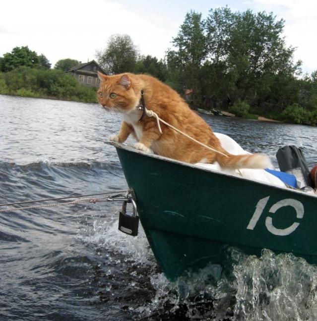Взяв з собою кота на риболовлю