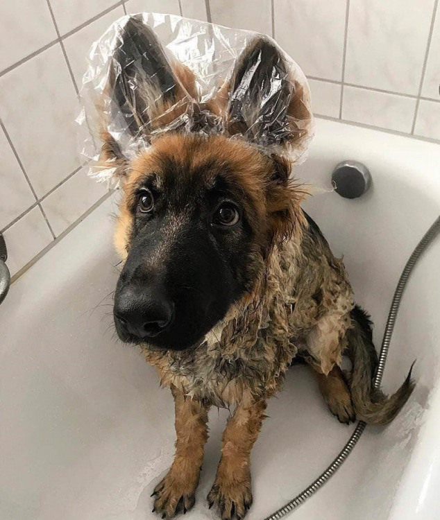 Щоб вуха не залити водою