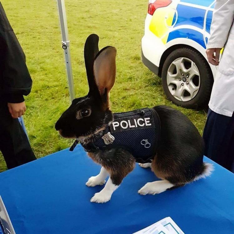 Кролик на службі поліції