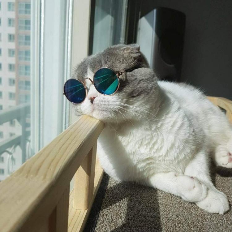 Кот в окулярах