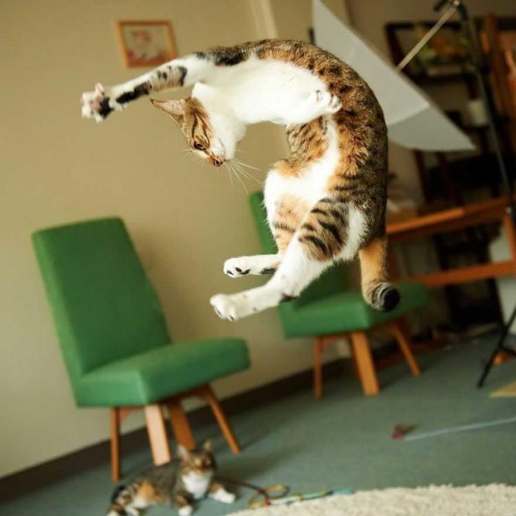 Кіт під час стрибку