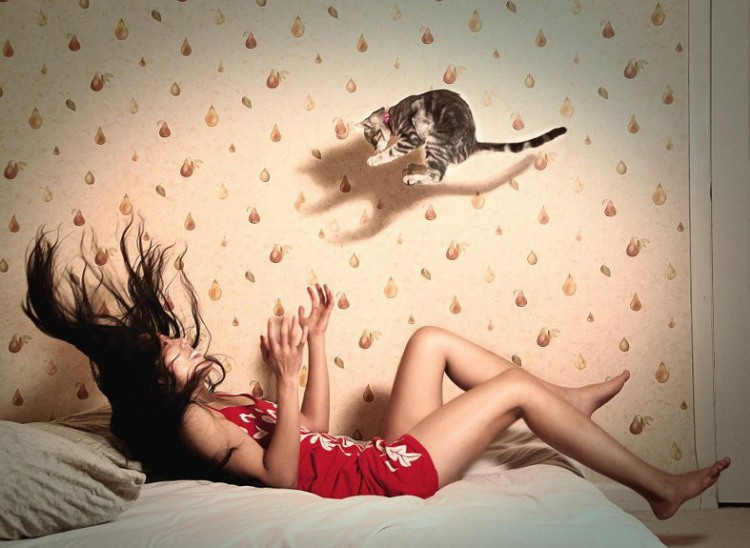 Лови кошеня