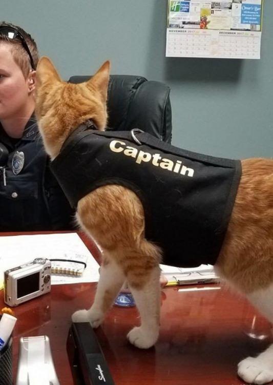 Капітан кіт