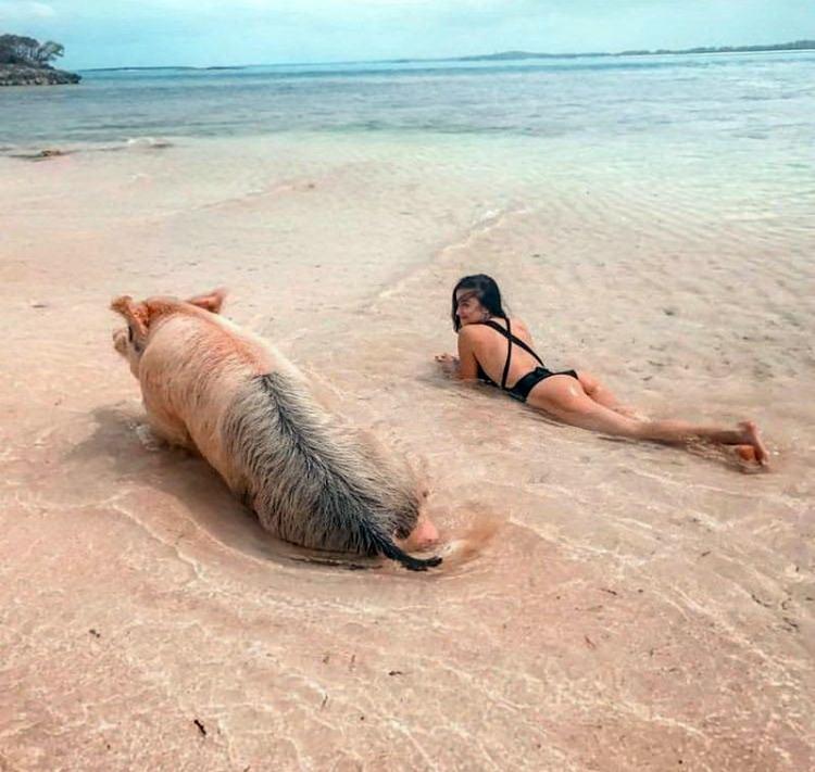 Пляж свиней