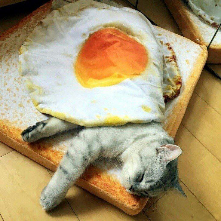 Омлет з котом
