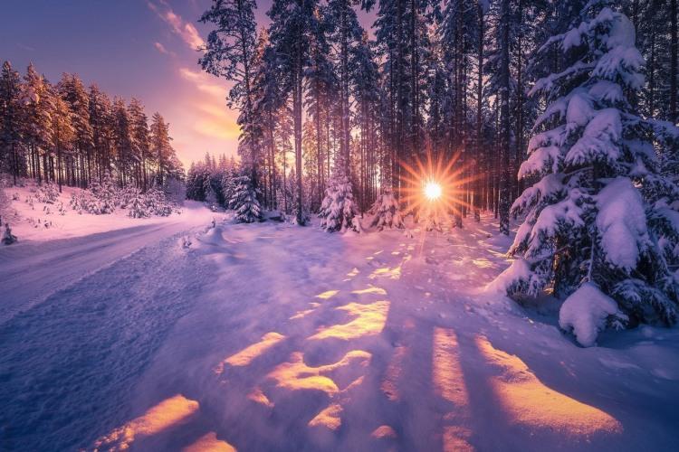 Захід сонця в зимовому лісі