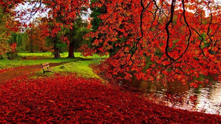Червона осінь