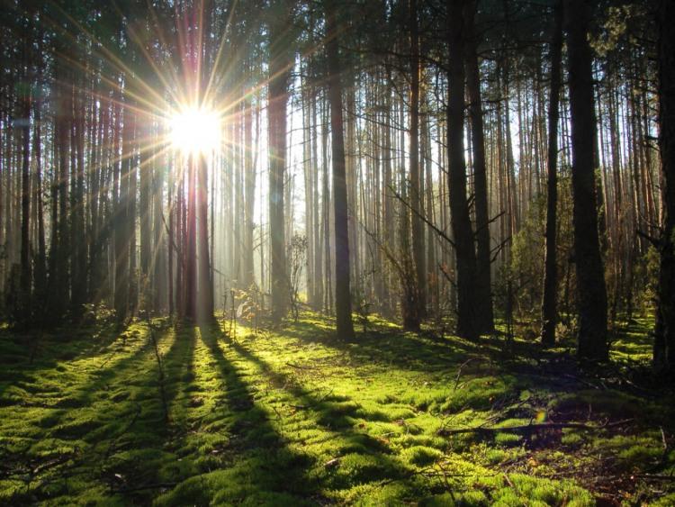 Промінець світу в лісі