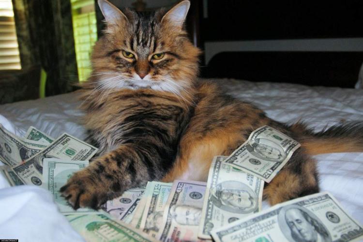 Багатий кіт