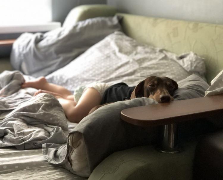 Пес відпочиває в ліжку