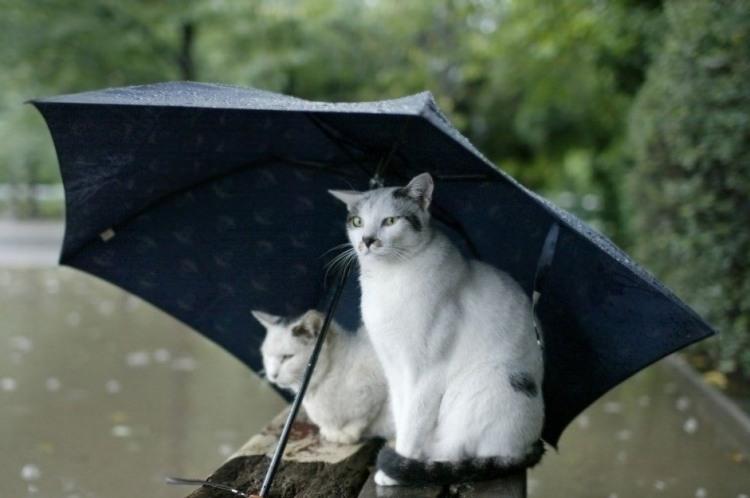 Коти сховалися під парасолькою
