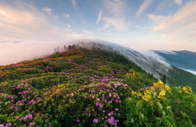 Ранковий туман в карпатах