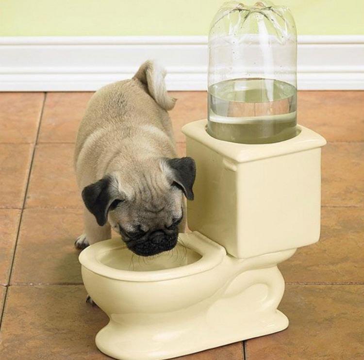 Унітаз-поїлка для собак
