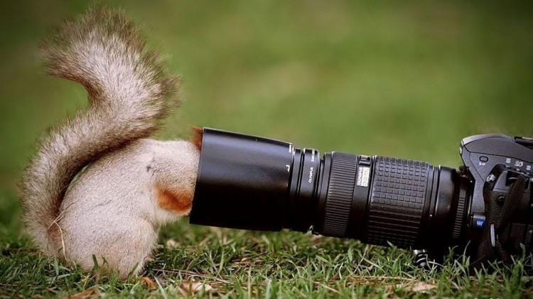 Білка в пошуках фотографа