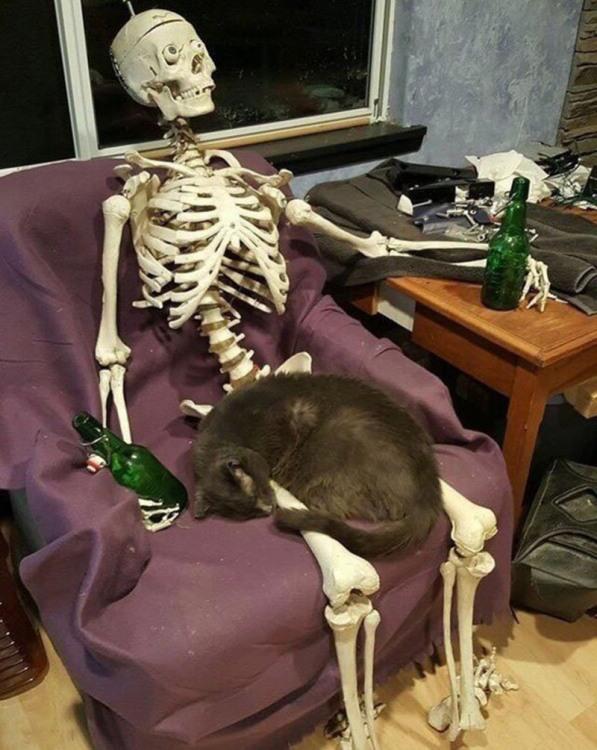 Господар спився і кіт залишився сам