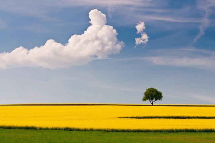 Жовті квіти - символ самотності