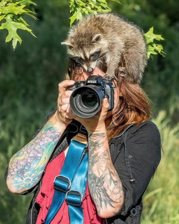 Єнот помічник фотографа