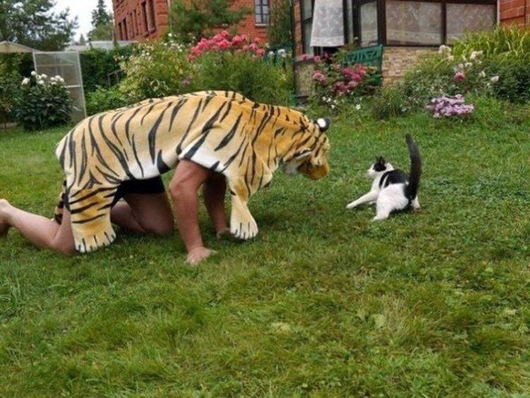 Ефективний спосіб налякати кота