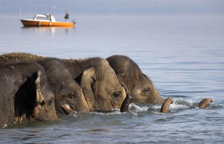 Слони прийшли на водопій