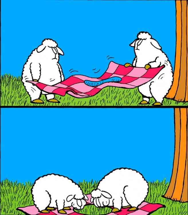 Вівці на пікніку