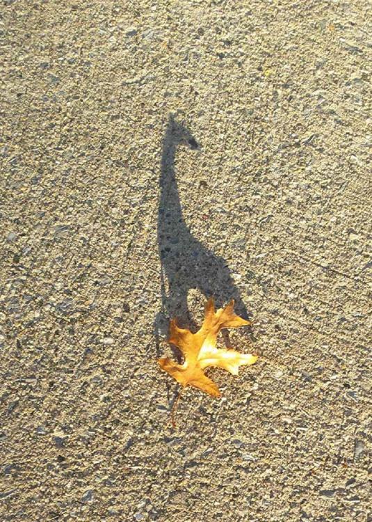 Тінь жирафа від листочка