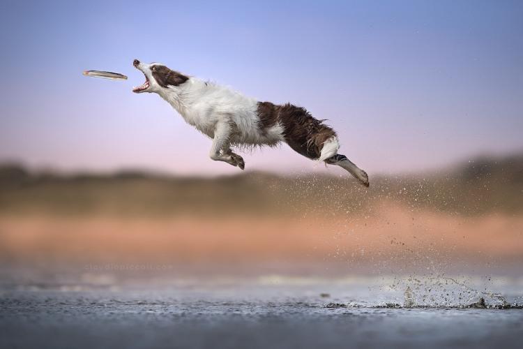 Пес в стрибку