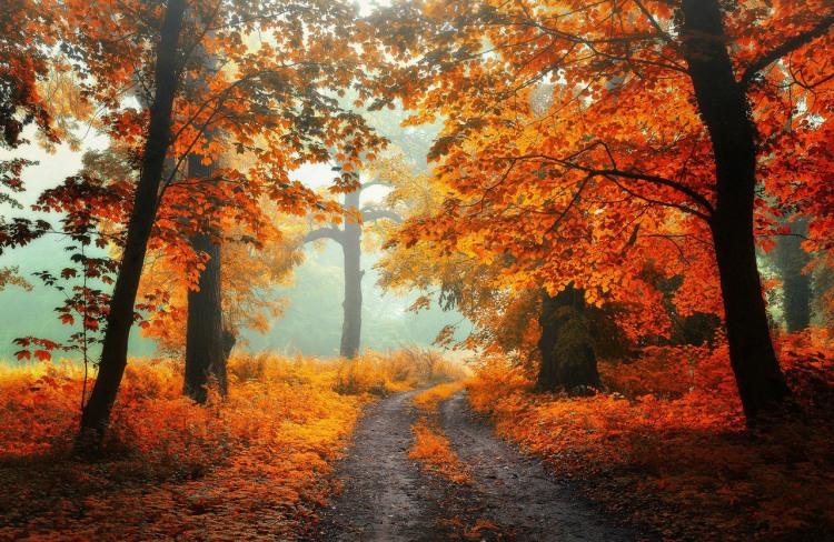 Осіння дорога в лісі