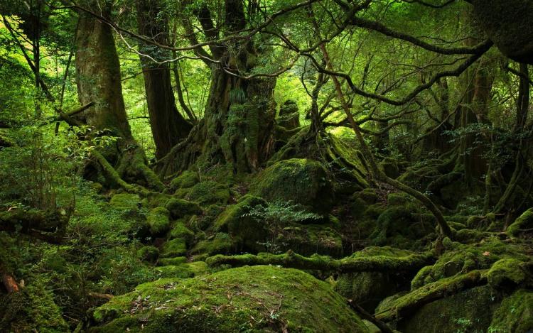 Яскраво виражений напрямок на північ у лісі