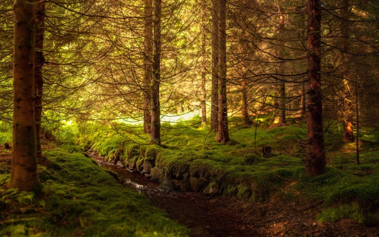 Мох в лісі