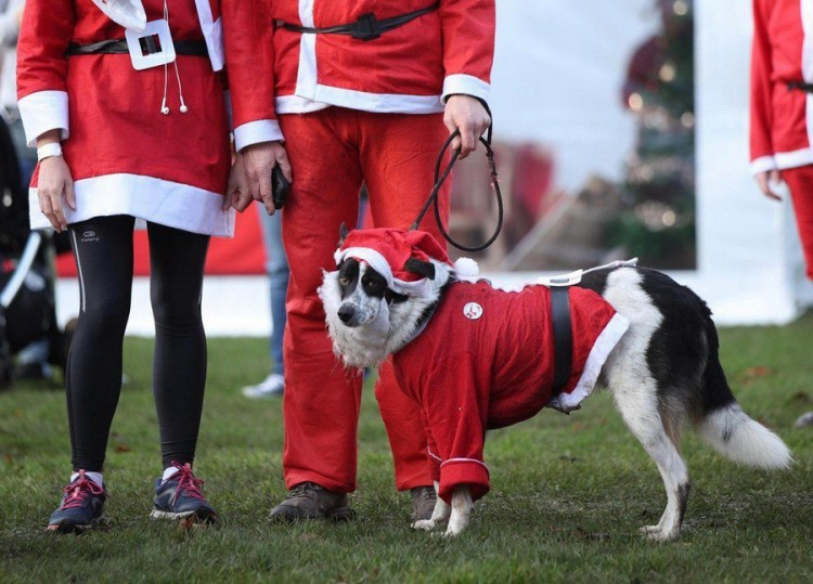 Санта з собакою