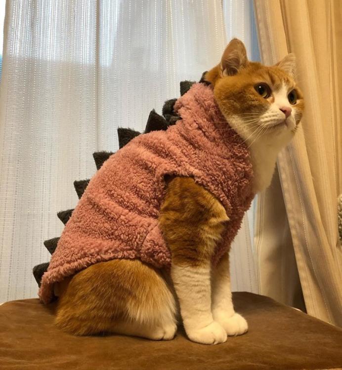 Кот рептилоїд