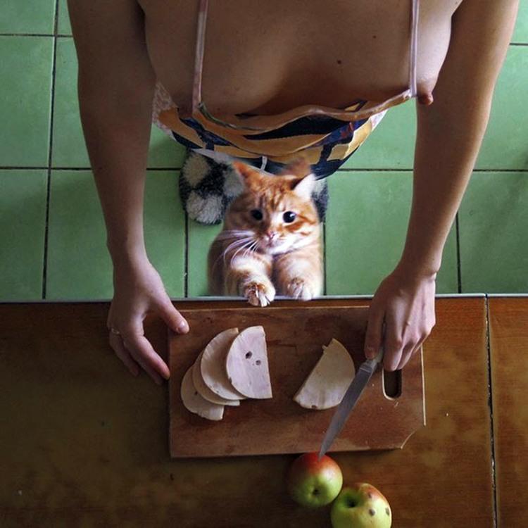Голодний кіт у сексуальної домогосподарки